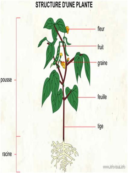 3 une plante